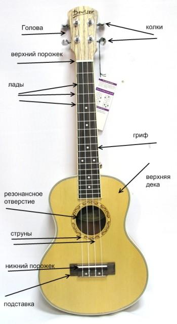 Названия частей корпуса укулеле.
